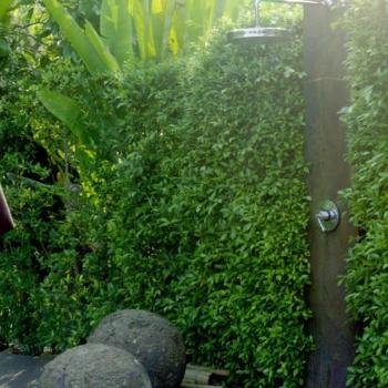 Hecke als Sichtschutz für die Gartendusche Foto: Glowonconcept / shutterstock.com